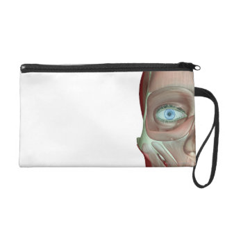 Musculoskeleton of the Face Wristlet