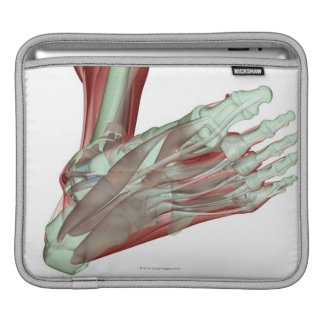 Musculoskeleton of the Foot 2 iPad Sleeves