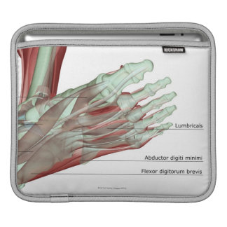 Musculoskeleton of the Foot Sleeves For iPads