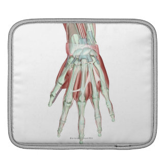 Musculoskeleton of the Hand 2 iPad Sleeve