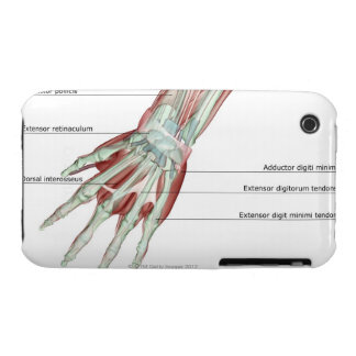 Musculoskeleton of the Hand iPhone 3 Case-Mate Case