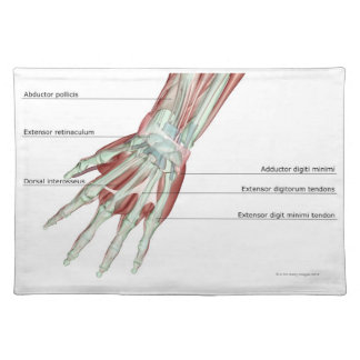 Musculoskeleton of the Hand Placemat