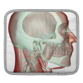 Musculoskeleton of the Head and Neck 2 iPad Sleeve