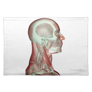 Musculoskeleton of the Head and Neck 2 Placemat
