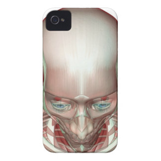 Musculoskeleton of the Head and Neck iPhone 4 Case-Mate Case