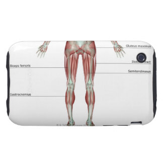 Musculoskeleton of the Lower Body iPhone 3 Tough Case