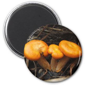 Mushroom 299 ~ magnet