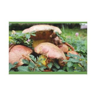 Mushroom Canvas