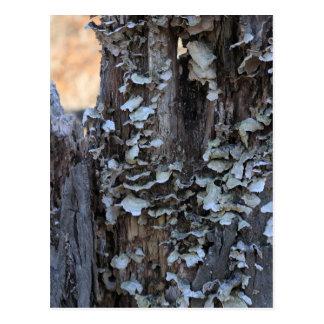 Mushroom Covered Stump Postcard