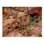 Mushroom Family Postcards