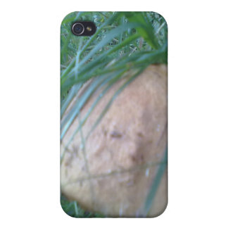 Mushroom in the forest iPhone 4/4S cover