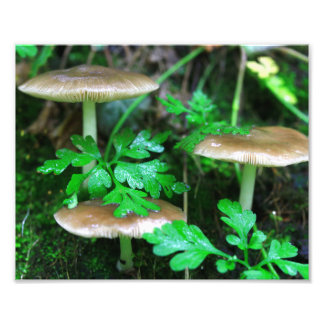 Mushroom Mornings Photo Print