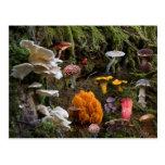Mushroom Paradise Post Card