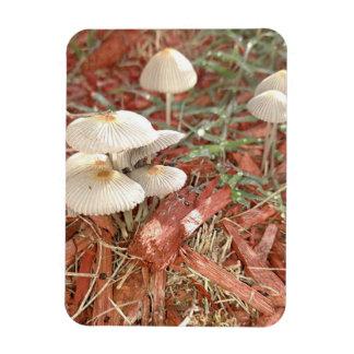 Mushroom Photo Magnet