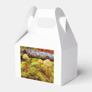 Mushroom photo party favor box