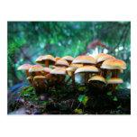 mushroom village post cards