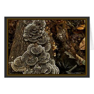mushrooms card