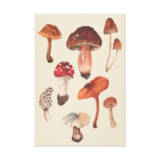 Mushrooms Illustration Canvas Print