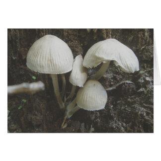 Mushrooms in Stump Note Card