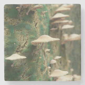 Mushrooms on a Tree Stone Coaster