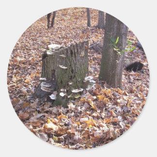 Mushrooms on Stump Stickers