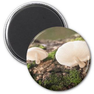 Mushrooms take chance to grow 6 cm round magnet