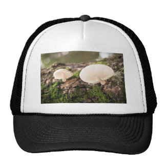Mushrooms take chance to grow cap