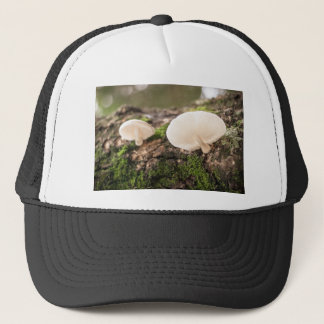 Mushrooms take chance to grow trucker hat