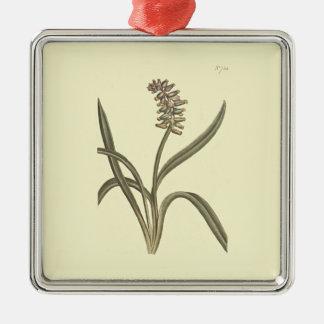 Musk Grape Hyacinth Botanical Illustration Silver-Colored Square Decoration
