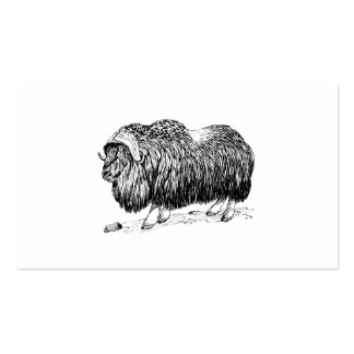 Musk Ox Pack Of Standard Business Cards