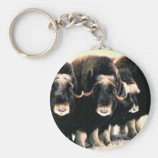 Musk Oxen Basic Round Button Key Ring
