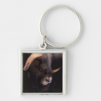 muskox, Ovibos moschatus, bull on the central Silver-Colored Square Key Ring