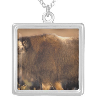 muskox, Ovibos moschatus, youth on the central Silver Plated Necklace
