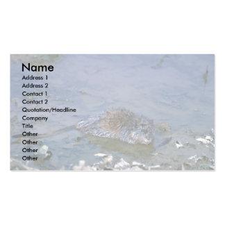 Muskrat at edge of marsh business card templates