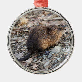 Muskrat Silver-Colored Round Decoration