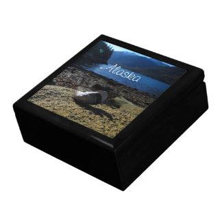 Mussel Shell Model Alaska Souvenir Trinket Boxes