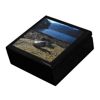 Mussel Shell Model Jewelry Box