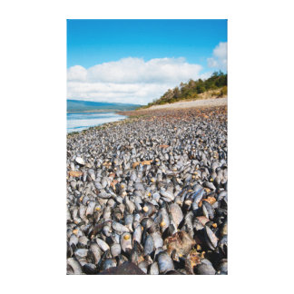 Mussels along shoreline in Patagonia, Argentina Canvas Print