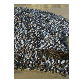 Mussels At The Cove 14 Cm X 19 Cm Invitation Card