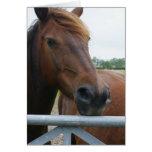 Mustang at Fence Greeting Card