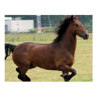 Mustang Galloping Postcard