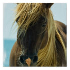 Mustang Horse Poster Print