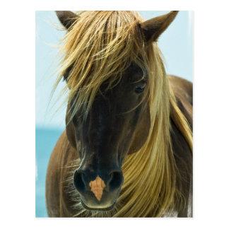 Mustang Postcard