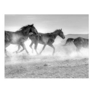 Mustang Run Postcard