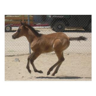Mustang-Spirit Post Card