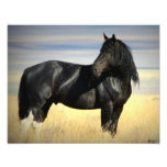 "Mustang Stallion ""SOX"" Photographic Print"