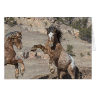 Mustangs Sparring: Galloping to Freedom Greeting Card