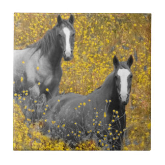 Mustard and Horses Small Square Tile