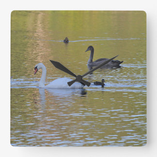 Mute Swan and cygnet Square Wall Clock