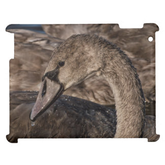 Mute Swan Cygnet Cover For The iPad 2 3 4